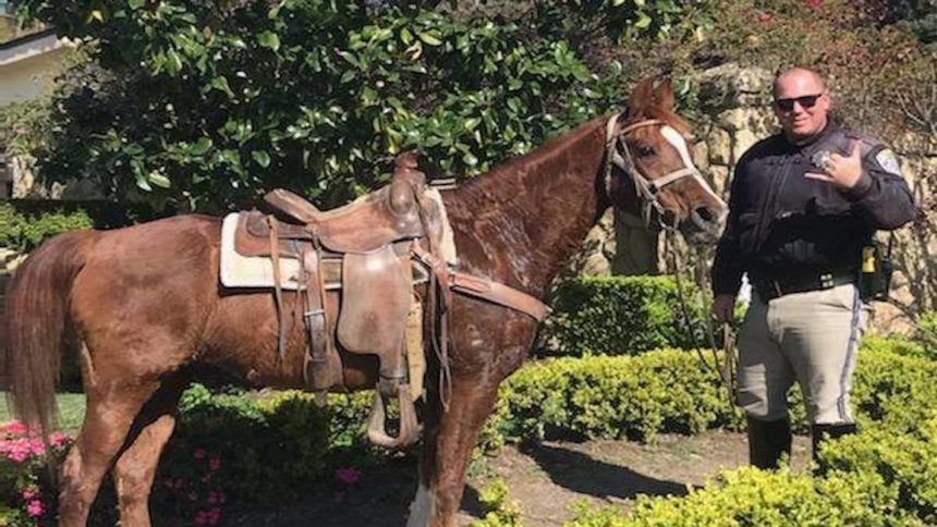 CHP Officers chase down horse