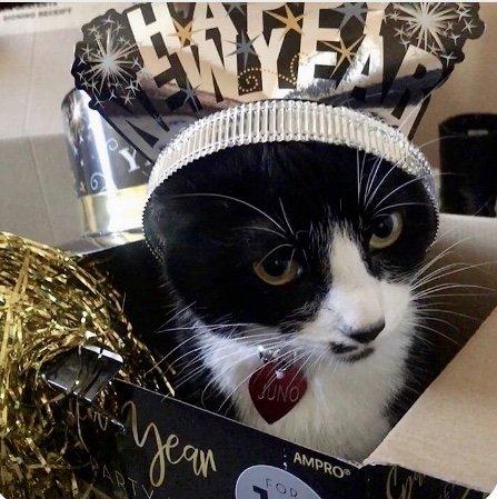 Juno the Klepto Kitty