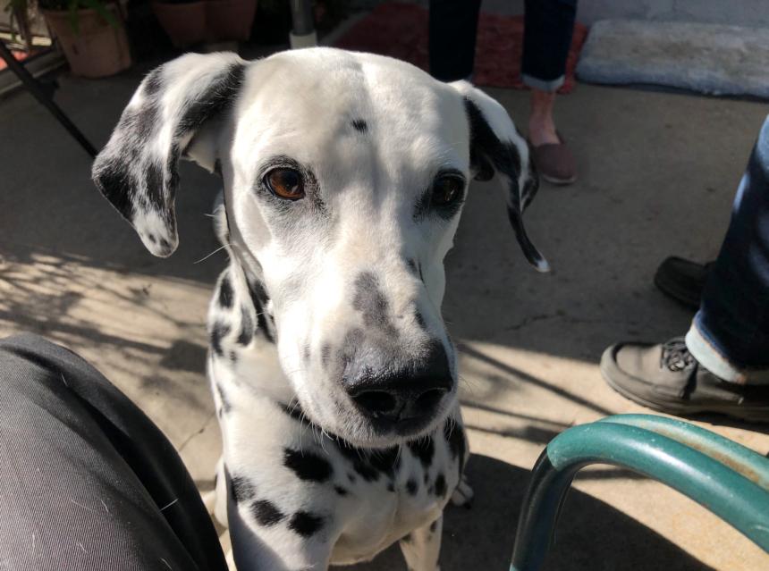Super Bowl Dog Phoebe 2020