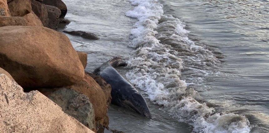 Whale beached