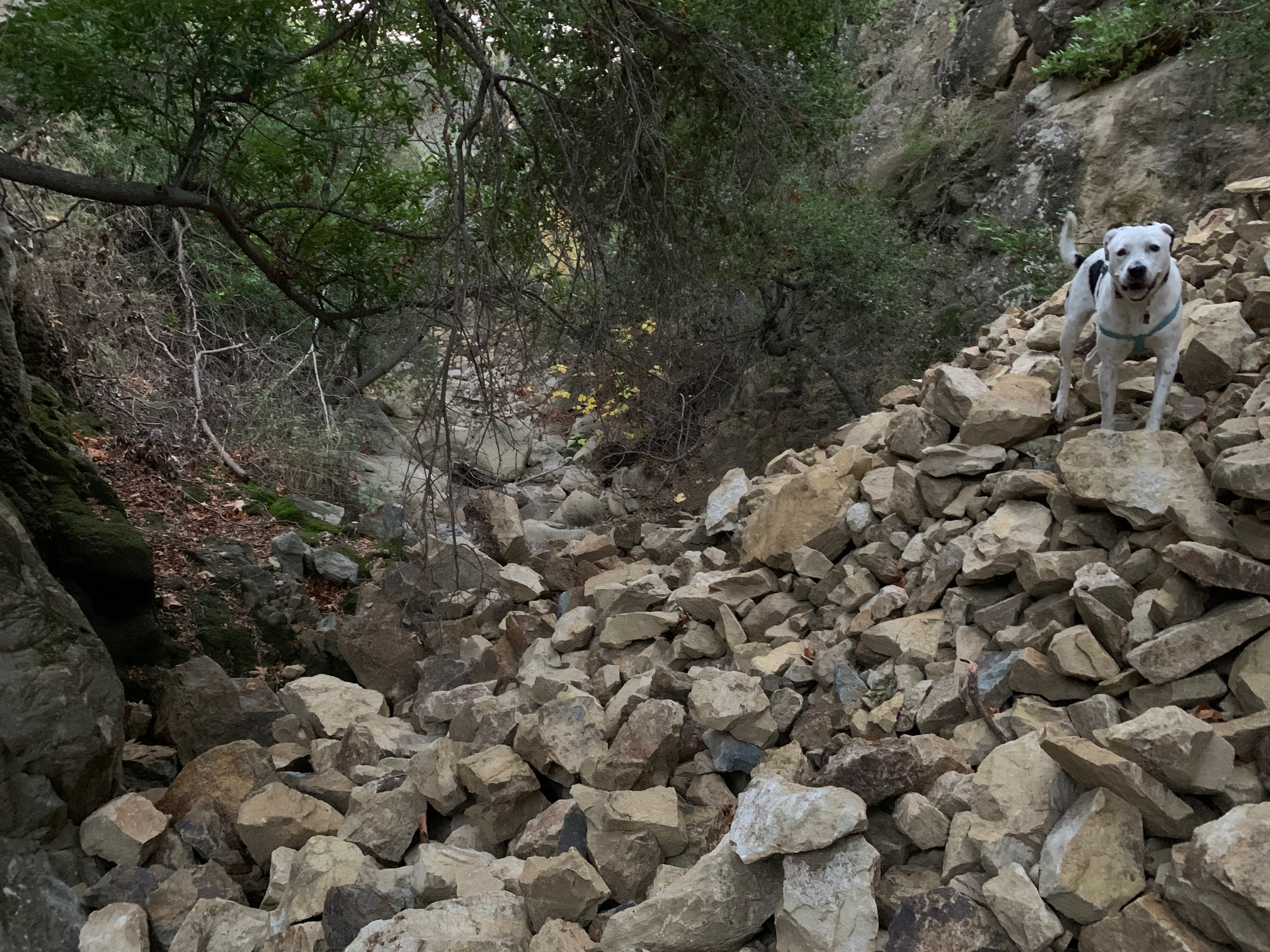 Boulders and debris fill a section of Mission Creek off Inspiration Point Trail. (Photo: Brian Trautwein/EDC)