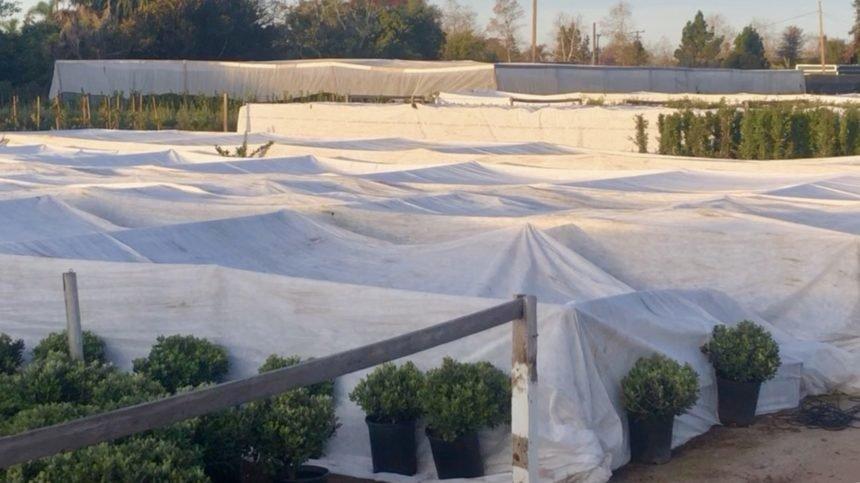 Carpinteria crops with plastic