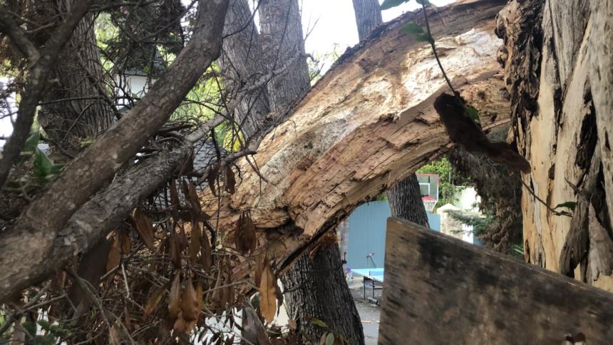 Tree damages SUV in Montecito