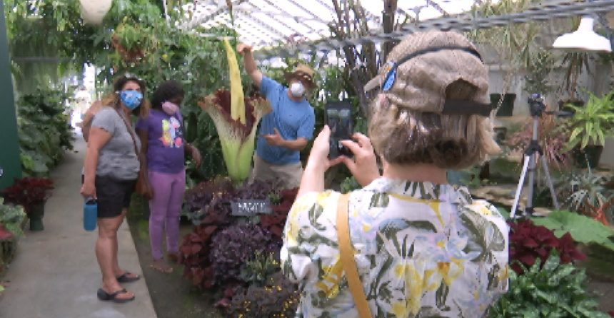 Corpse Flower Blooms At Cal Poly Bringing Hundreds Of Visitors To View The Rare Plant Newschannel 3 12