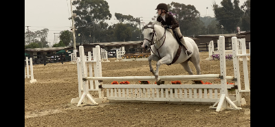 Earl Warren Showground horse jump