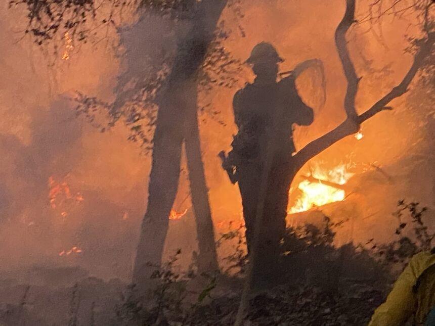 Firefighter August 2020