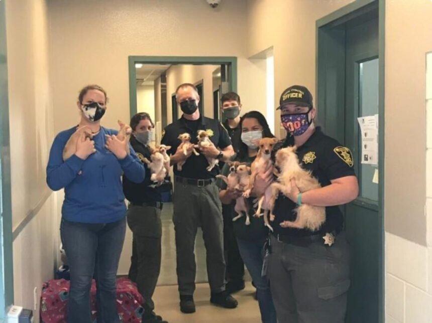 Animal Services Teamwork better