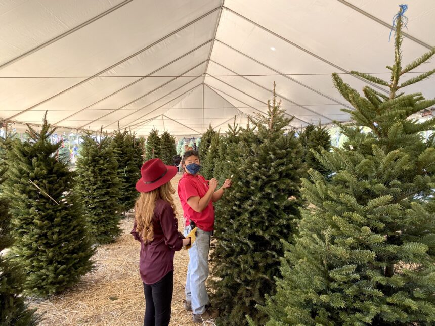 Pandemic doesn't deter Christmas tree shopping   NewsChannel 3-12
