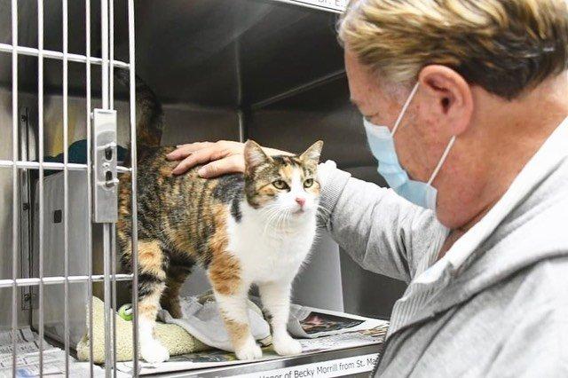 Patches the Montecito Mudslide survivor cat 1