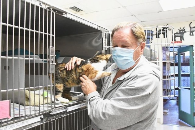 Patches the Montecito Mudslide survivor cat 2