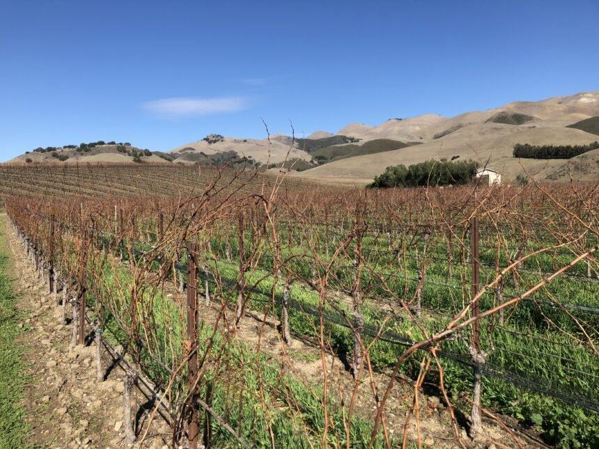 Talley Vineyards