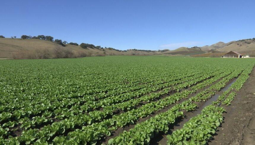Talley Farms