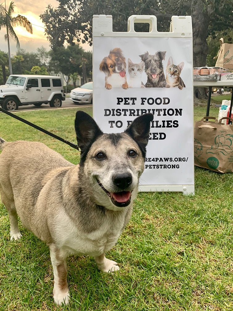 One of many clients receiving pet food on Thursdays at Alameda Park in Santa Barbara - WinkFace Photography