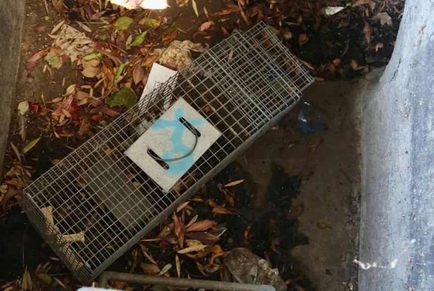 oxnard kitten rescue 061021 3