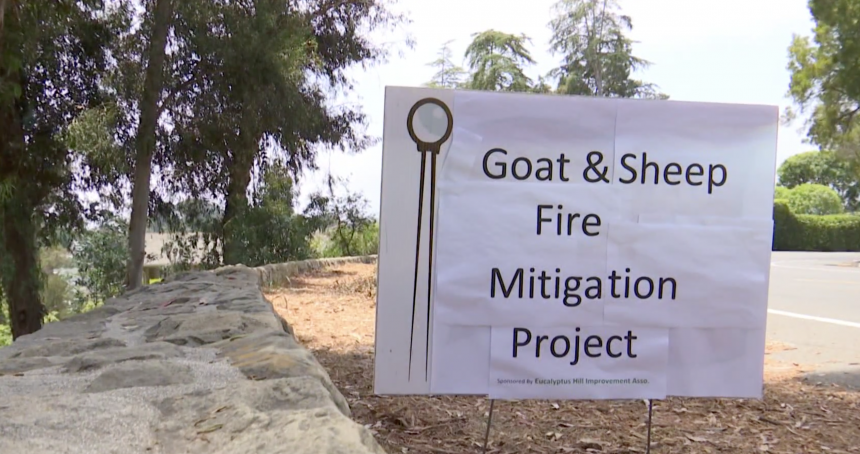 Goat and sheep fire prevention