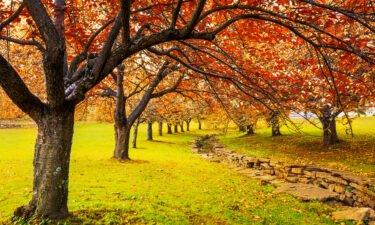 Autumn in Hurd Park